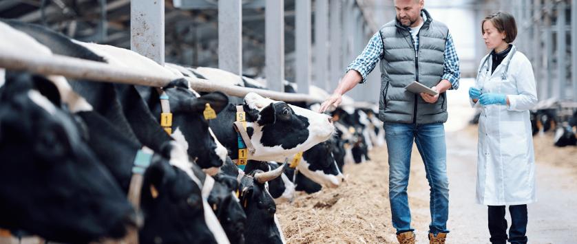 Produtividade em fazendas de leite