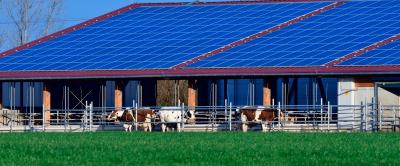 Energia solar para fazenda de leite: o que é preciso para implementar?