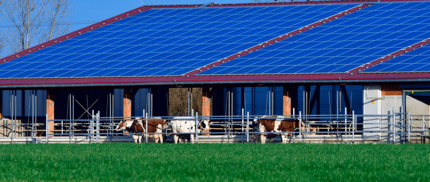 Energia solar para fazenda de leite