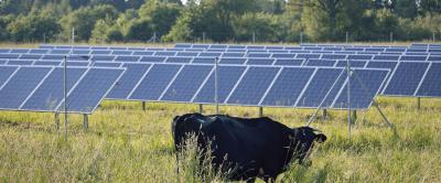 Como a energia solar pode melhorar a rentabilidade da fazenda leiteira?