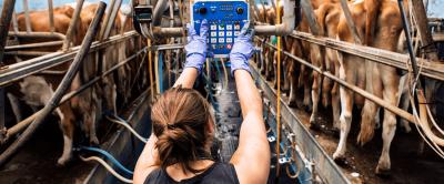 3 dos principais custos da fazenda leiteira e como reduzi-los