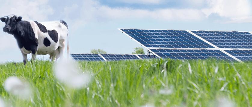 Energia solar em fazendas de leite