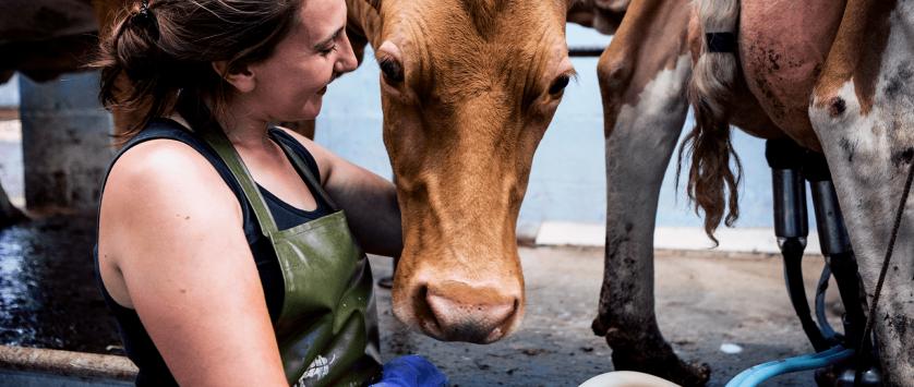saúde do rebanho leiteiro
