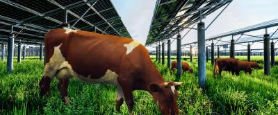 [E-book gratuito] Guia Ecofarm: o que é preciso para ter energia solar em fazendas de leite